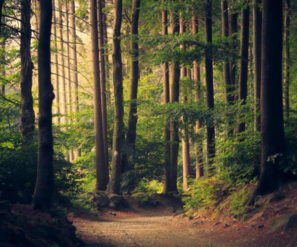 Forest Bathing for All