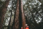 More than ever, hugging trees is good for your health