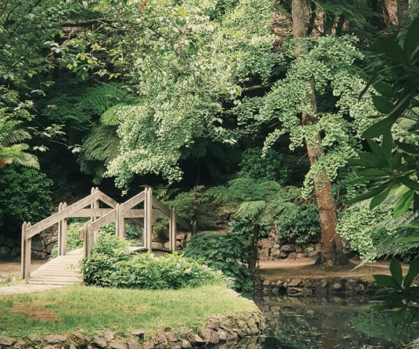 The Secret Garden: a place of healing during COVID-19
