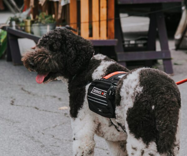 Services Assistance Dogs Can Provide