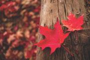 A closer look at the autumnal equinox